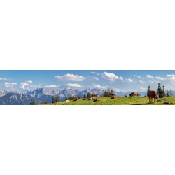Kälber auf der Alm - Bergpanorama Almwiese