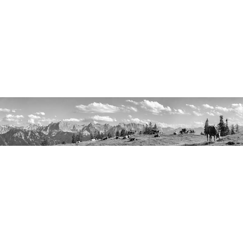 Kälber auf der Alm - Bergpanorama Almwiese - schwarz weiß