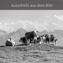Kälber - Kühe auf der Alm
