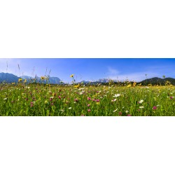 Blumenwiese-Berge