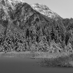 Schnee auf den Bäumen