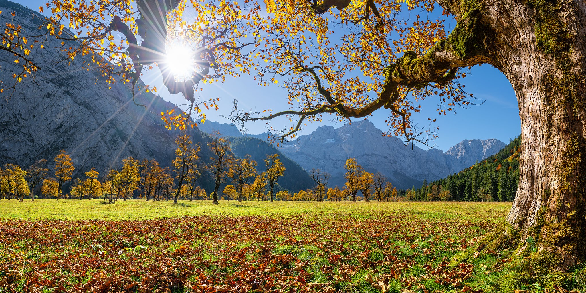 Ahornboden Herbst