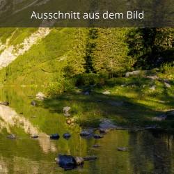 Spiegelung Bergwald