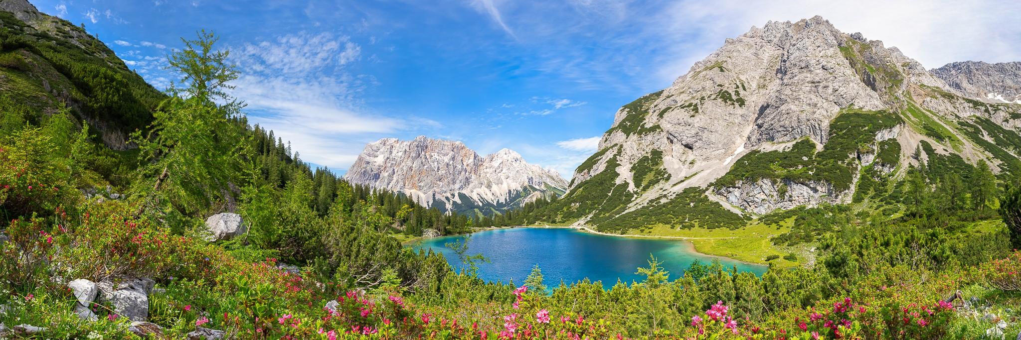 Der Bergsee im Wettersteingebirge (Mieminger Gruppe) liegt idyllisch im Tal mit Blick auf das Zugspitzmassiv mitdem Schneefernerkopf. Im Vordergrund blühen die Almrosen, rund um den See grasen die Kälber.