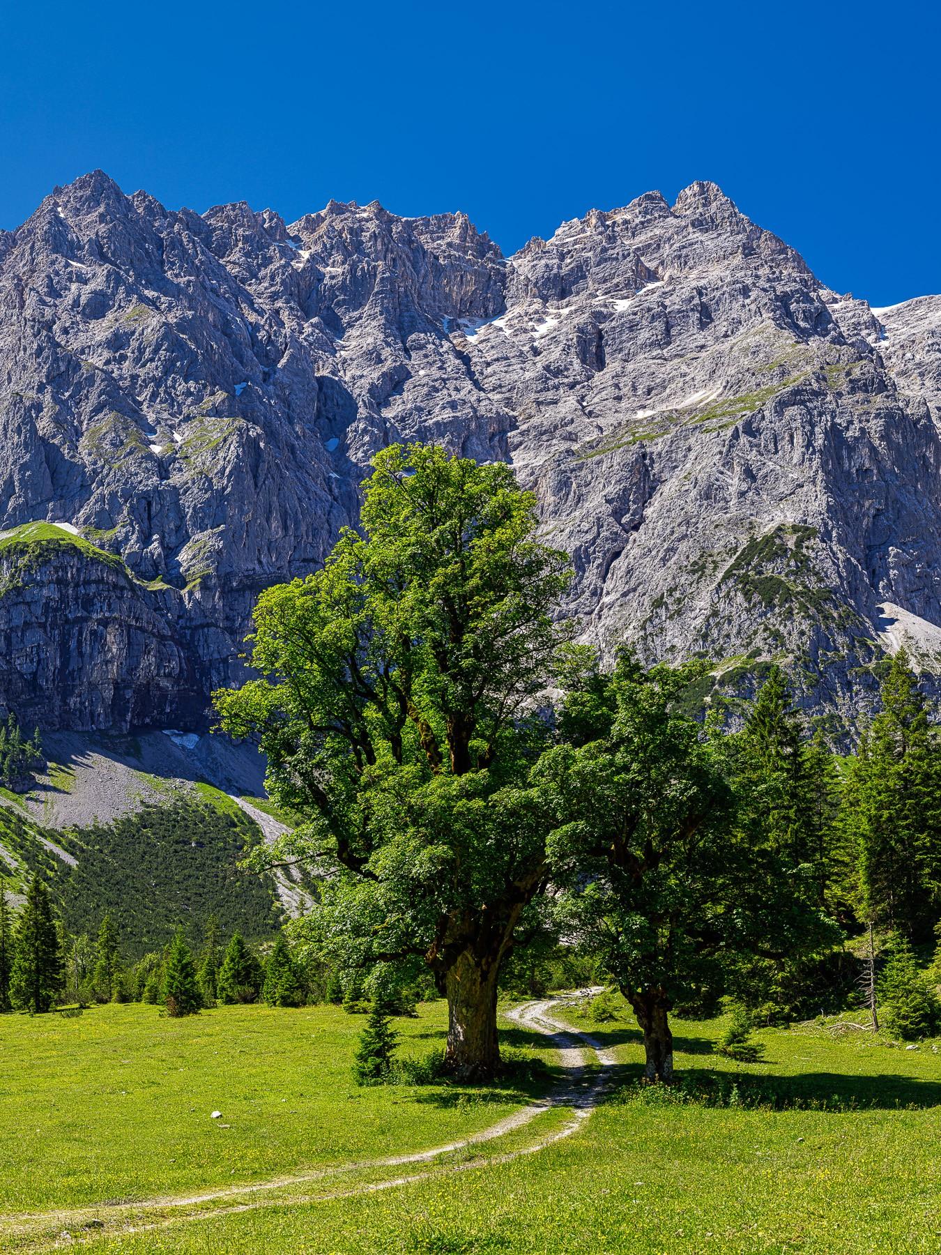 Sommer am Kleinen Ahornboden, der Weg führt zwischen den Ahornbäumen hinauf zum Karwendelhaus. Rechts oben ist die Kaltwasserkarspitze (2733m).