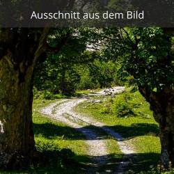 Weg zwischen den Bäumen