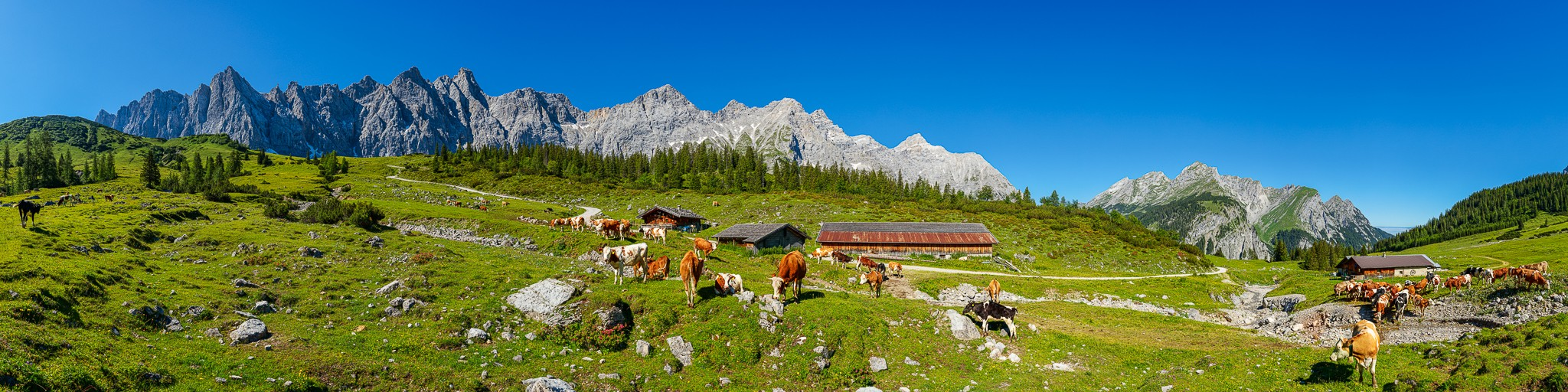 Almwiese im Karwendel - Ladizalm