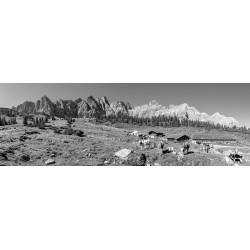 Ladizalm - Alm im Karwendel - schwarz weiß