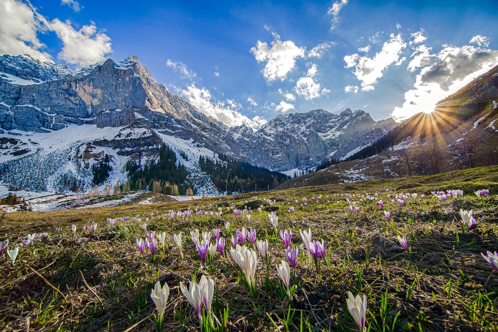 Krokuswiese in der Eng bei Sonnenuntergang, die Sonne kratzt noch am Bergrücken, gleich wird es kalt. Der Schnee bleibt bis Ende April am großen Ahornboden im Karwendel liegen.