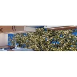 Küchenrückwand - Apfelbaum - Apfelblüten