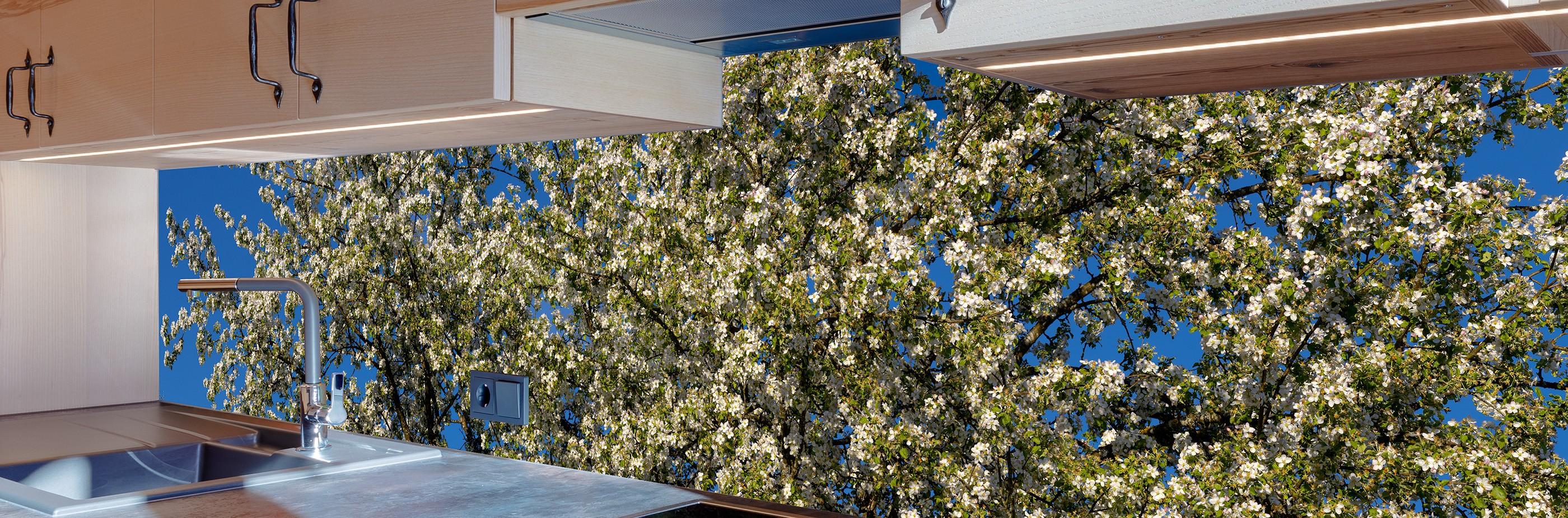 Küchenrückwand mit Apfelblüten (Holzapfelbaum)