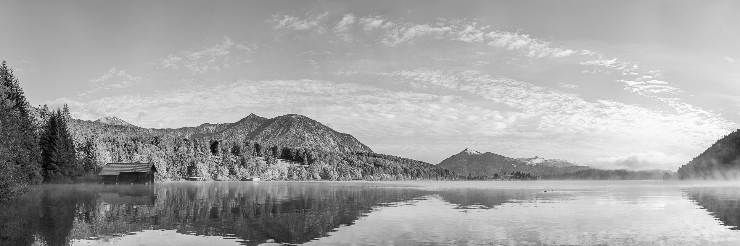 Genieße den Seeblick unter einem von den ersten Sonnenstrahlen erleuchteten Ahorn am Walchensee