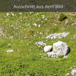 Almwiese Karwendel