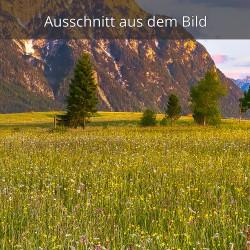 Blumenwiese Mittenwald