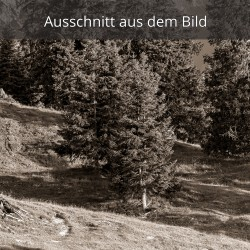 Almwiese - Bergwald