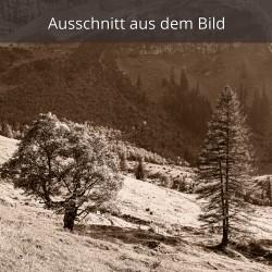 Engalm-Bäume
