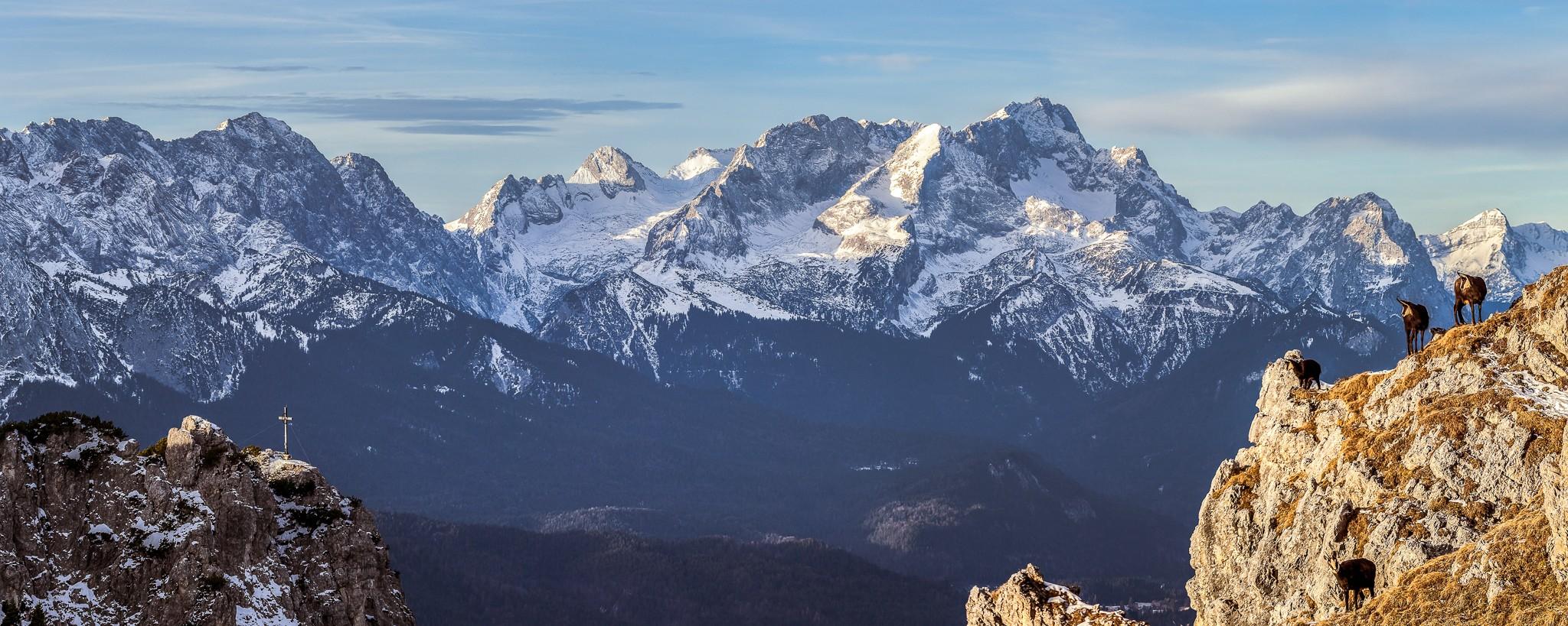 Seinskopf - Wettersteinblick mit Gämsen, Alpspitze Zugspitze