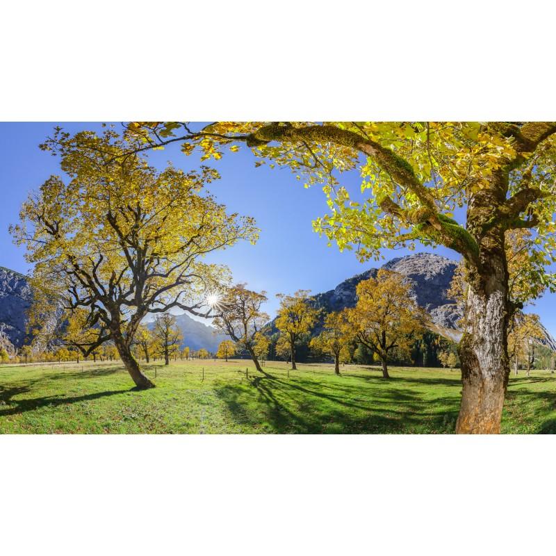 Ahornwald am Großen Ahornboden