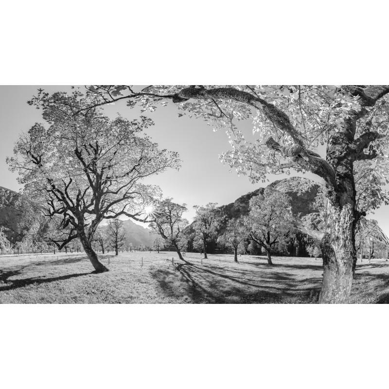 Ahornwald am Großen Ahornboden schwarz weiß