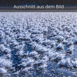 Raureif - Eisblumen - Eisrosen