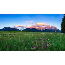 Buckelwiesen Blumenwiese - Alpenglühn