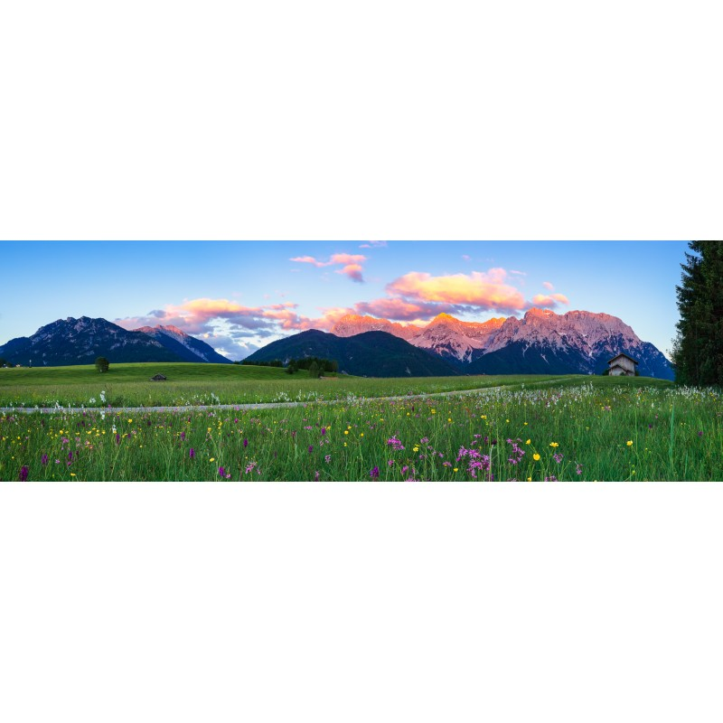 Buckelwiesen Blumenwiese - Alpenglühn Panorama