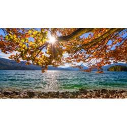 Walchensee Herbstbuche