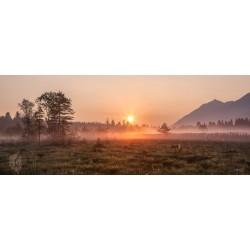 Sumpfwiese Sonnenaufgang Morgentau