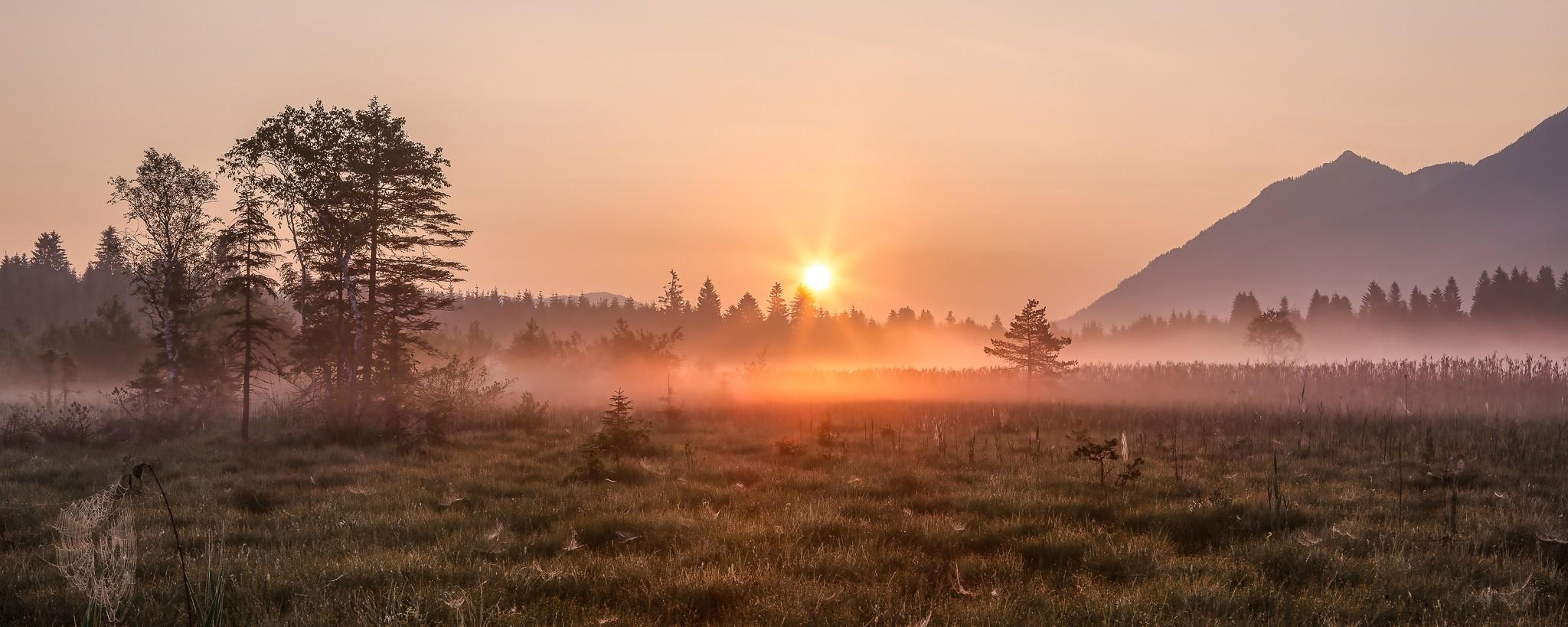 Auf den Gräsern und Spinnweben haftet der Morgentau, der Bodennebel löst sich mit dem Sonnenaufgang gerade auf und der Tag beginnt.