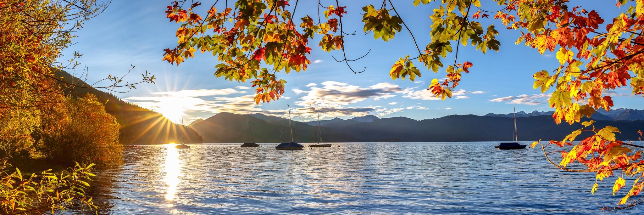 Sonnenaufgang - Genieße den Seeblick unter einem von den ersten Sonnenstrahlen erleuchteten Ahorn am Walchensee.