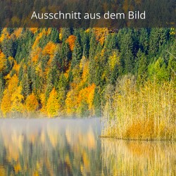 Herbstwald am Barmsee