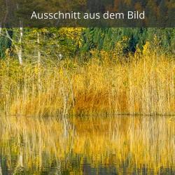 Schilf am See - Herbst
