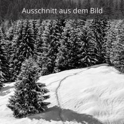 Spur in den verschneiten Wald