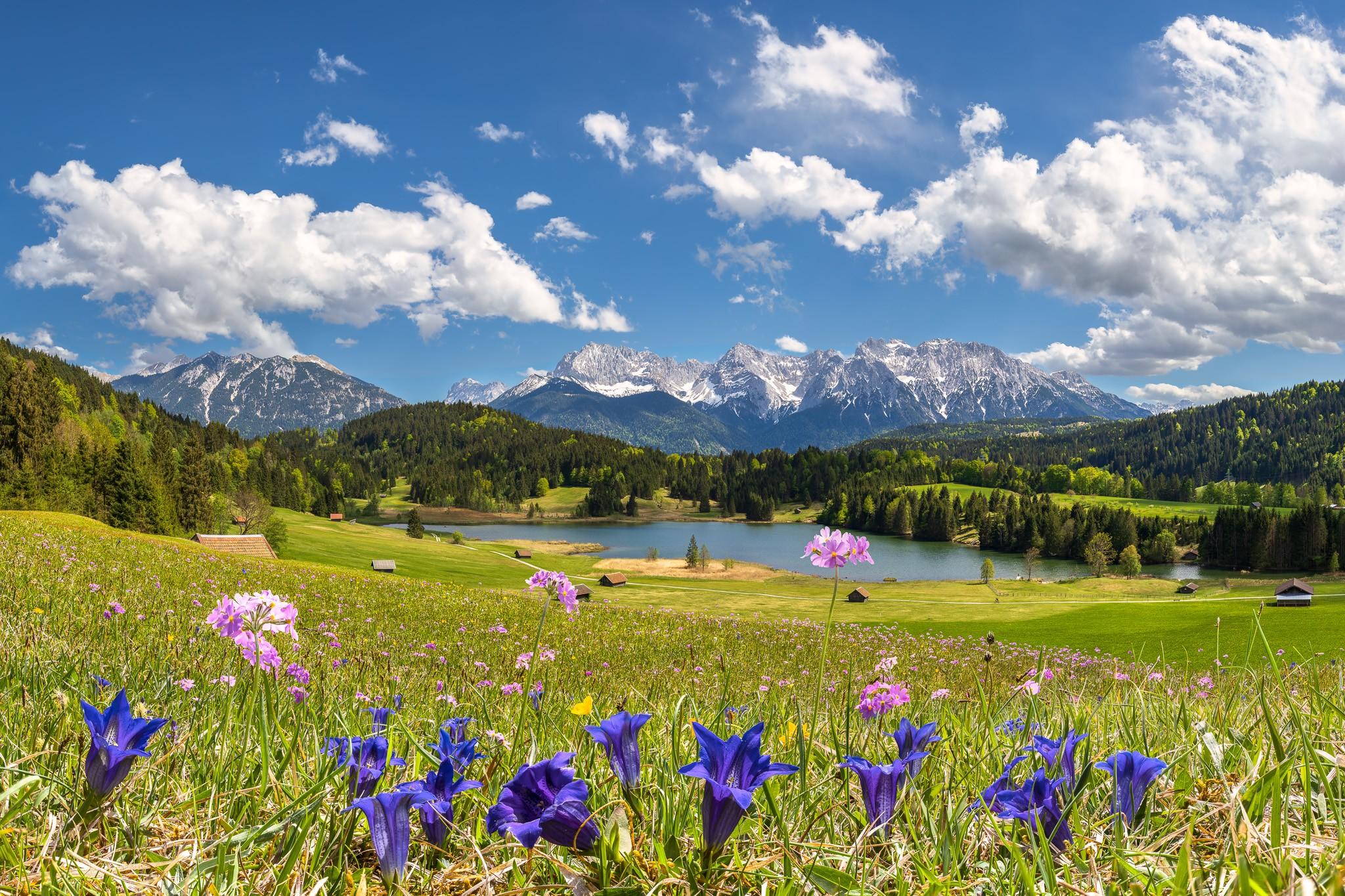 Gerold - Mehlprimeln und Enzian - Blumenwiese