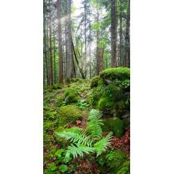 Bergwald mit Pilzen