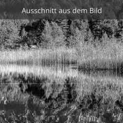 Schilf am See