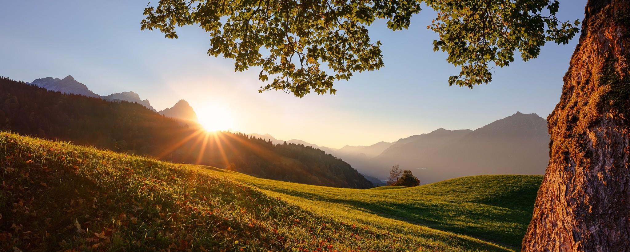 Die letzten Sonnenstrahlen des Herbsttages streifen die Bergwiesen am Wamberg. Idyllischer Sonnenuntergang unter einem alten Ahorn auf die Alpspitze, Zugspitze und den Großen Waxenstein.
