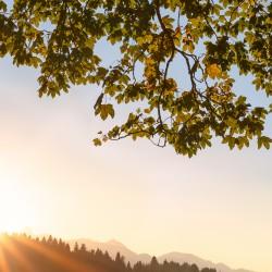 Herbstlaub, Sonnenuntergang