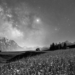 Blumenwiese bei Nacht schwarz weiß