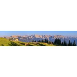 Blick ins Karwendel - Almwiese Krüner Alm