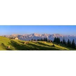 Almwiese mit Blick auf das Karwendelgebirge - Berglandschaft