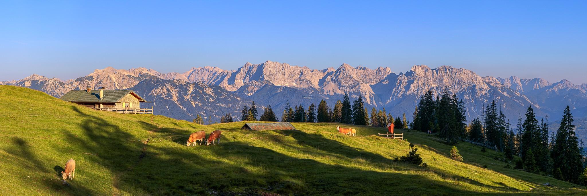 Karwendelpanorama Krüner Alm - Die Kälber grasen auf der Almwiese.