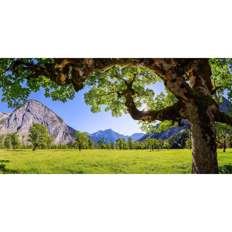 Sommer am Großen Ahornboden - Engalm